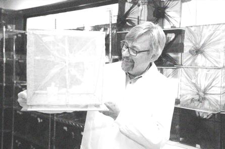 Scott O'Neill empieza a trabajar con la <i>Wolbachia</i> y el dengue